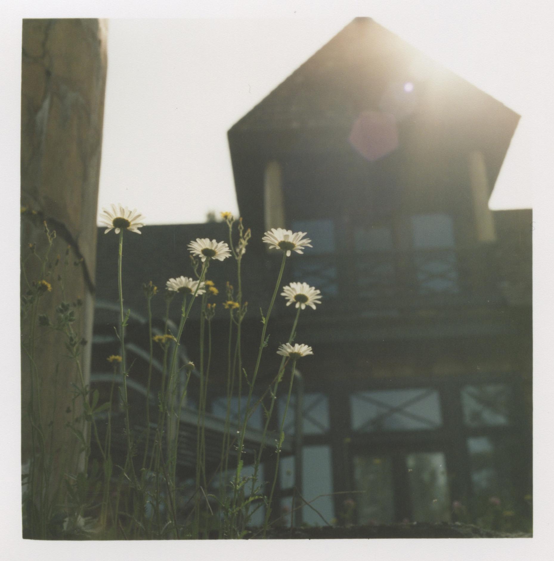 Flowersatfourwinds.jpg