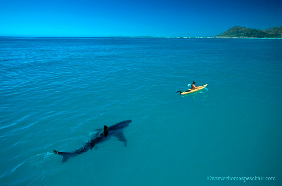 This is the shark equivalent of having a rain cloud over you.