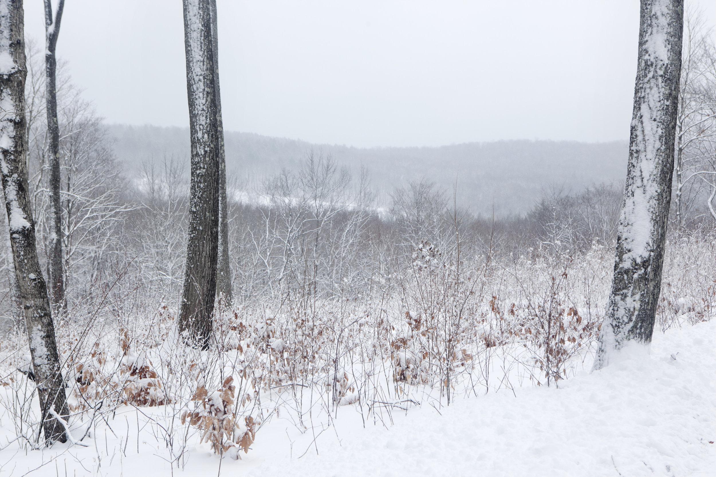 Winter_Home_FL_20100102_3087V2.jpg
