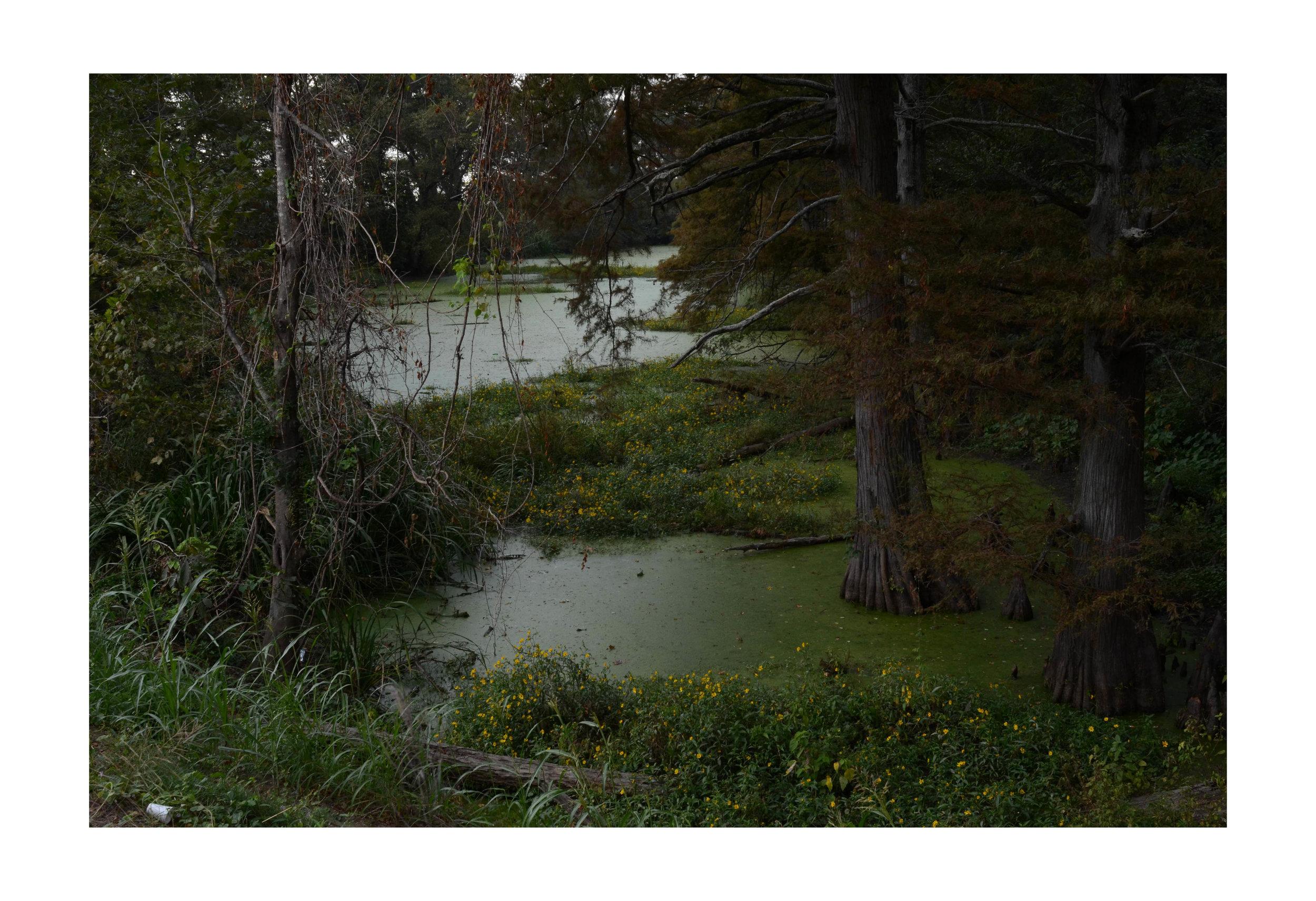 Flower Lake, MS
