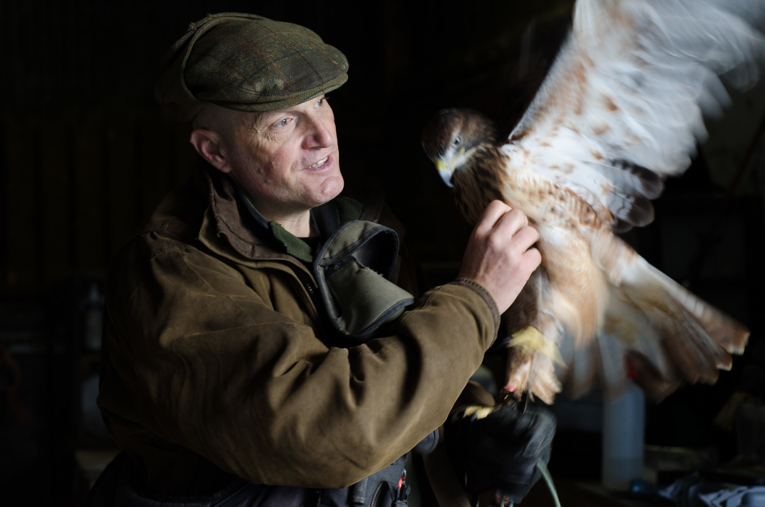 Martin Whitley of Dartmoor Hawking, weighing his birds before choosing which to fly that day.