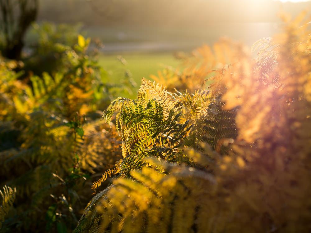 Osna Sonnenuntergang  - 03.jpg