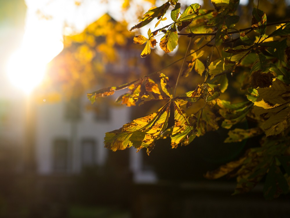 Herbst  - 18.jpg