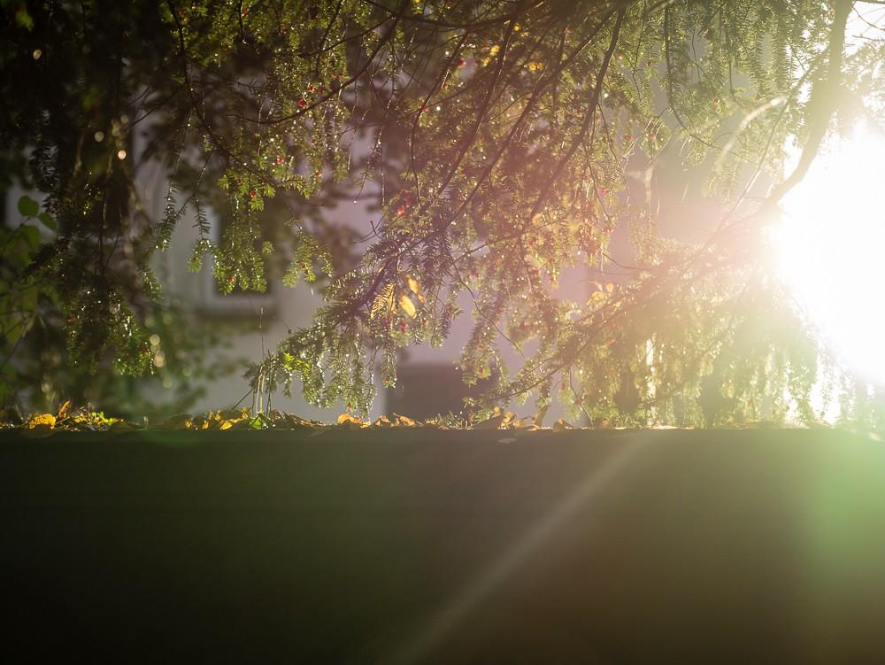 Herbst  - 20.jpg