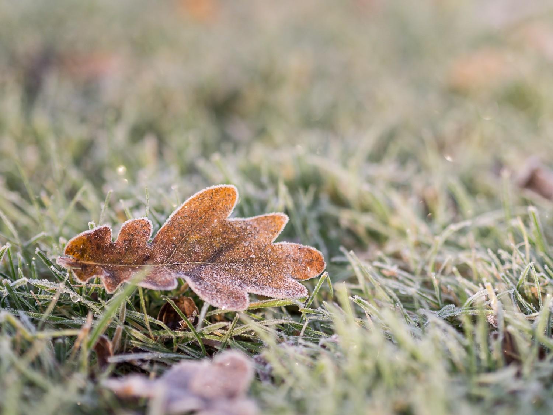 Frost  - 02-2.jpg