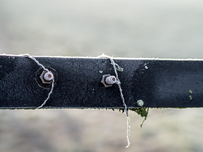 Frost  - 05-2.jpg