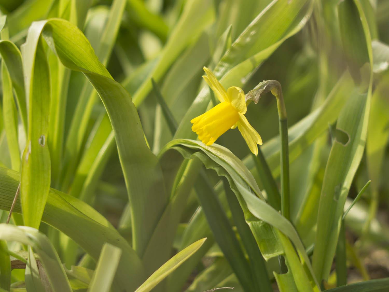 Frühling - 04 - 02.jpg