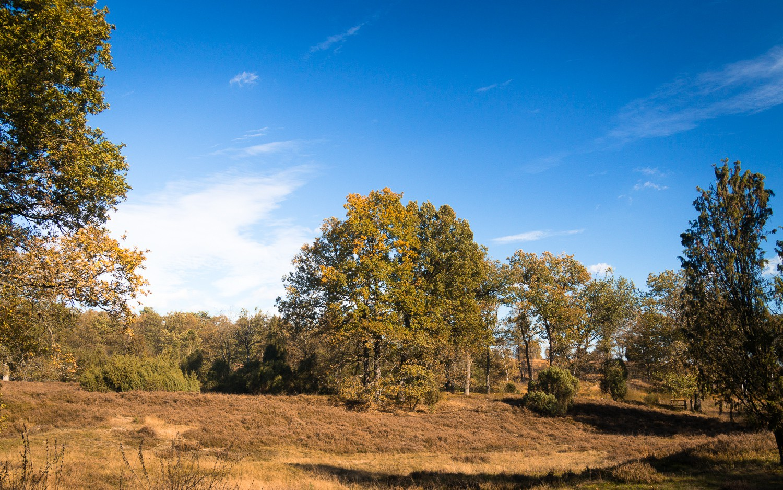 Heide 02 - 37.jpg
