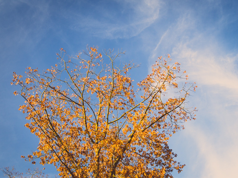 Herbst  - Laub - Sonne - Himmel - Blätter.jpg