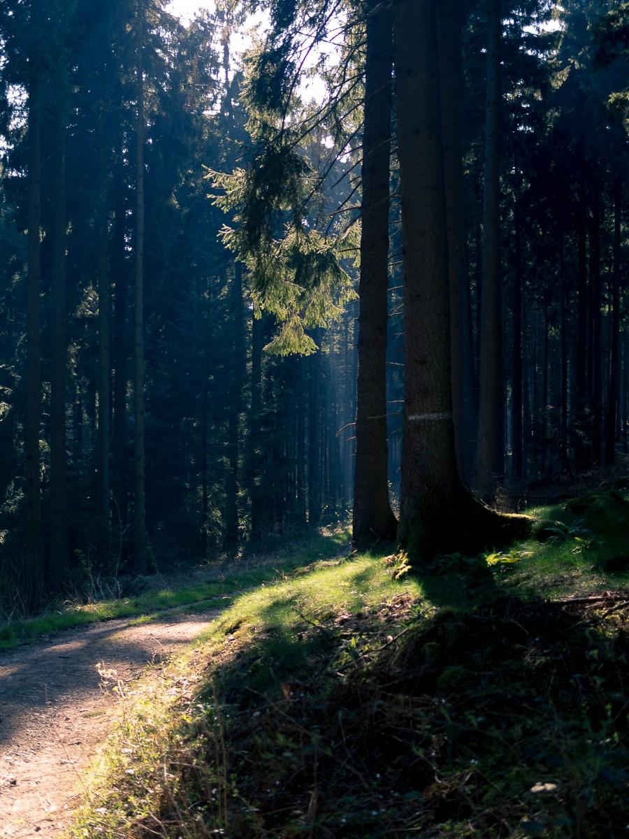 Bad Iburg Wald-23.jpg