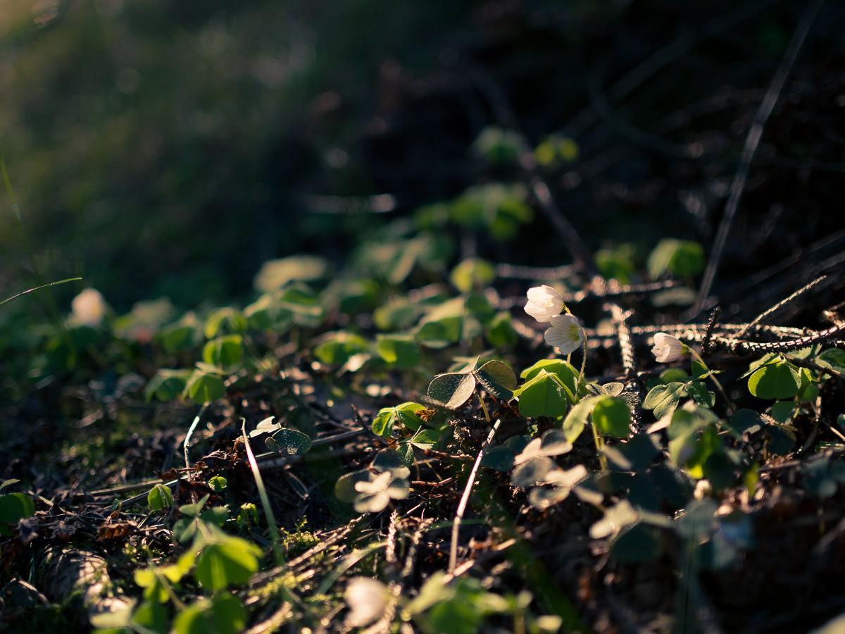 Bad Iburg Wald-22.jpg