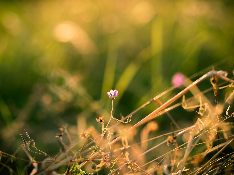 Sommer Sonne Licht Lensflare Makro Flower