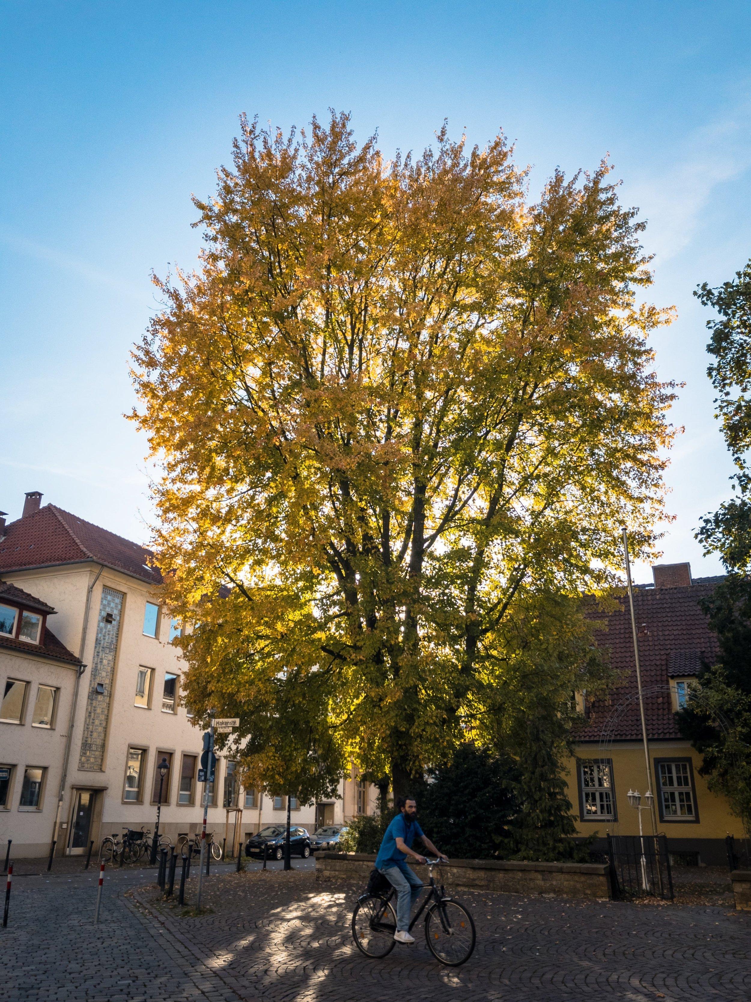 APC_0003-hdr 2 - Herbst ShotoniPhone Autumn Blätter Leaves Sun Sonne Light Threes Licht Bäume Baum Stadt Osnabrück.jpg