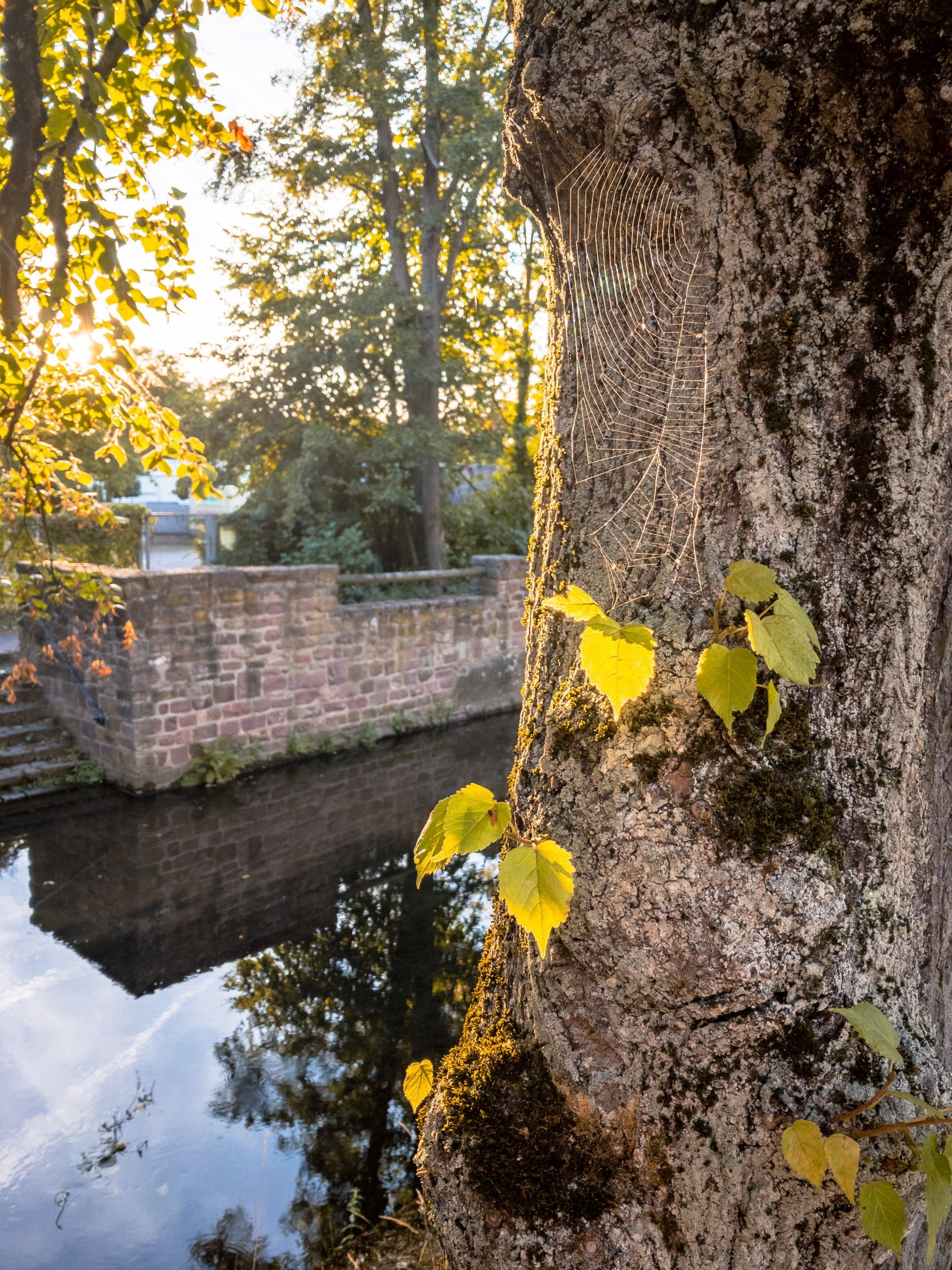 APC_0308-hdr - Herbst ShotoniPhone Autumn Blätter Leaves Sun Sonne Light Threes Licht Bäume Baum Stadt Osnabrück.jpg