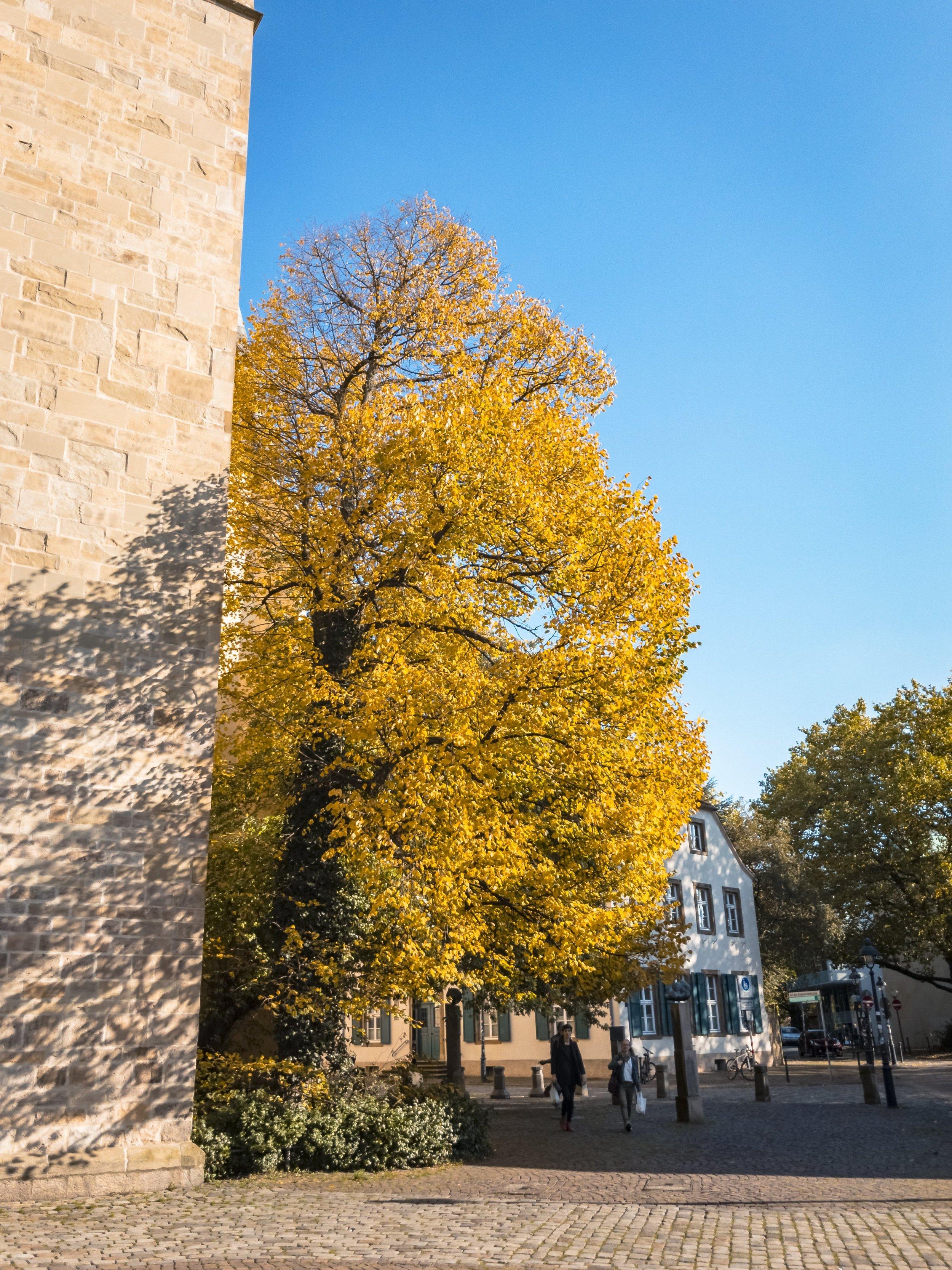 APC_0321-hdr - Herbst ShotoniPhone Autumn Blätter Leaves Sun Sonne Light Threes Licht Bäume Baum Stadt Osnabrück.jpg