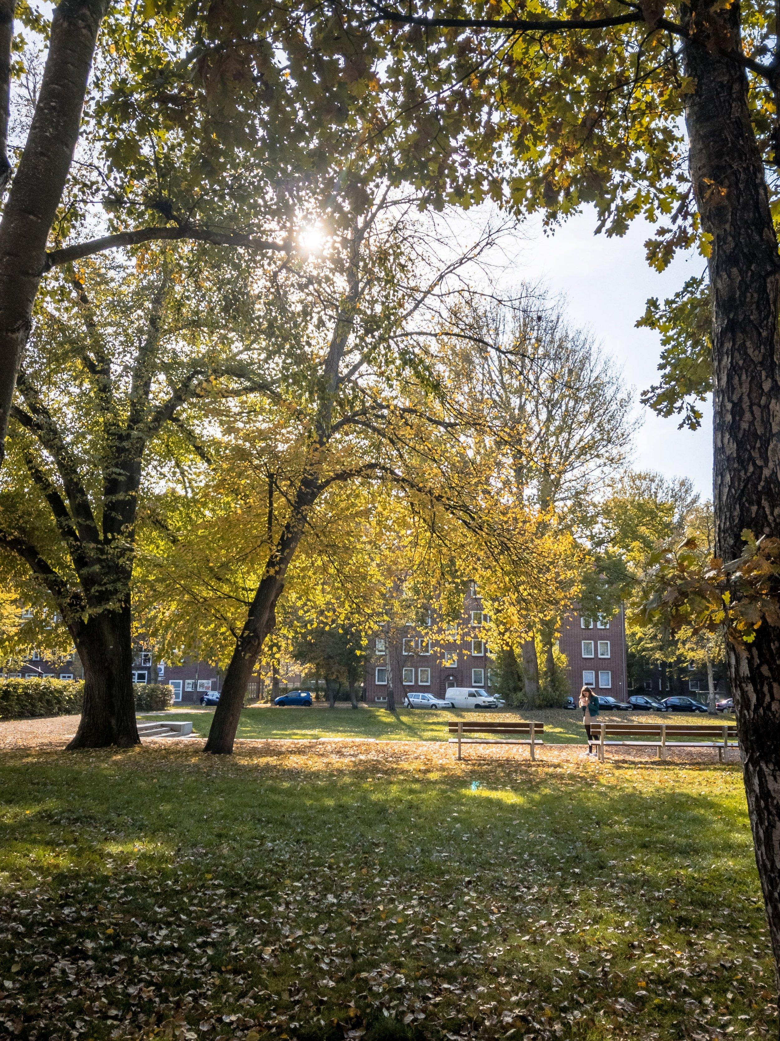 APC_0120-hdr - Herbst ShotoniPhone Autumn Blätter Leaves Sun Sonne Light Threes Licht Bäume Baum Stadt Osnabrück.jpg