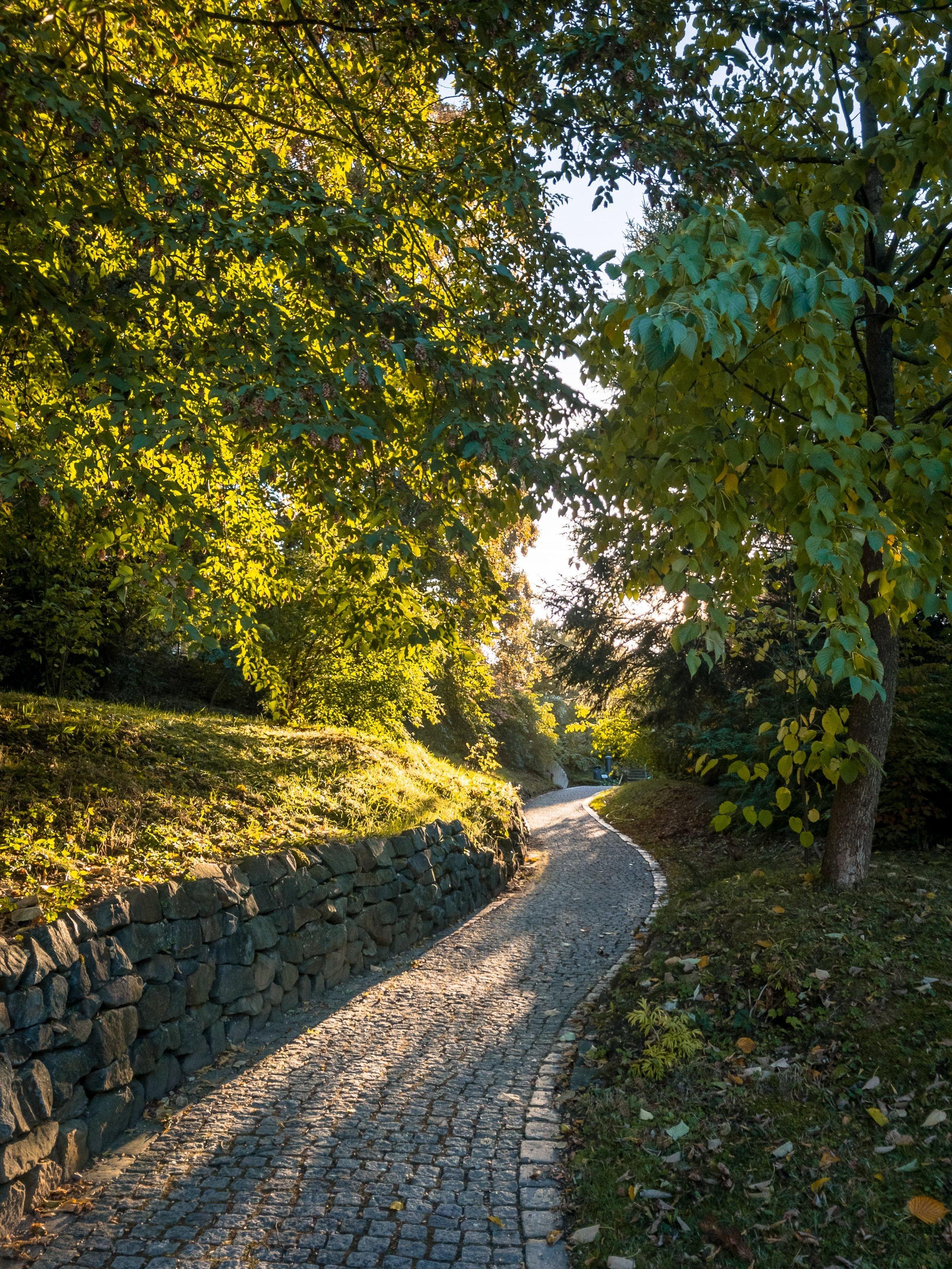 APC_0365-hdr - Herbst ShotoniPhone Autumn Blätter Leaves Sun Sonne Light Threes Licht Bäume Baum Stadt Osnabrück.jpg