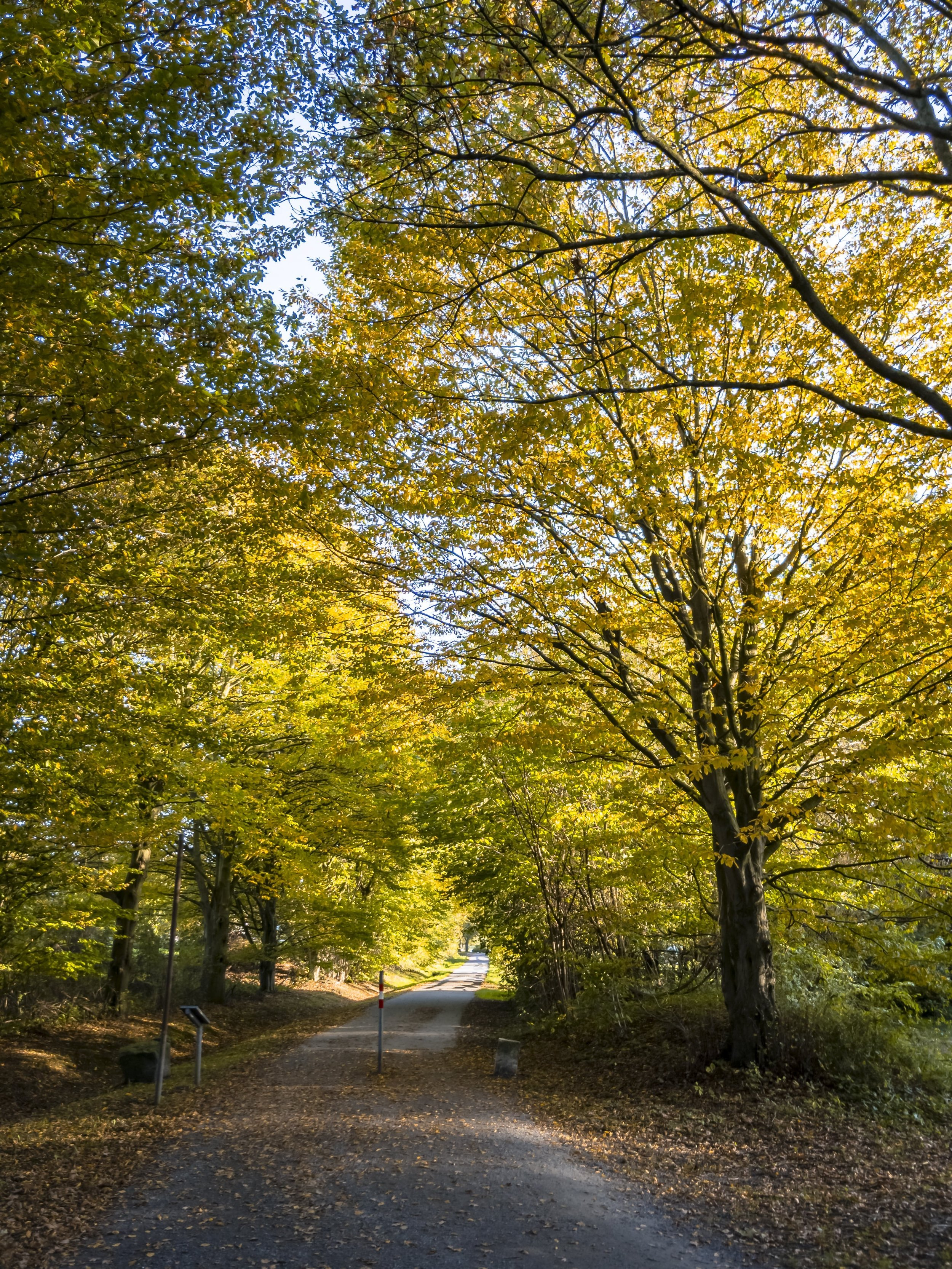APC_0399-hdr 2 - Herbst ShotoniPhone Autumn Blätter Leaves Sun Sonne Light Threes Licht Bäume Baum Stadt Osnabrück.jpg