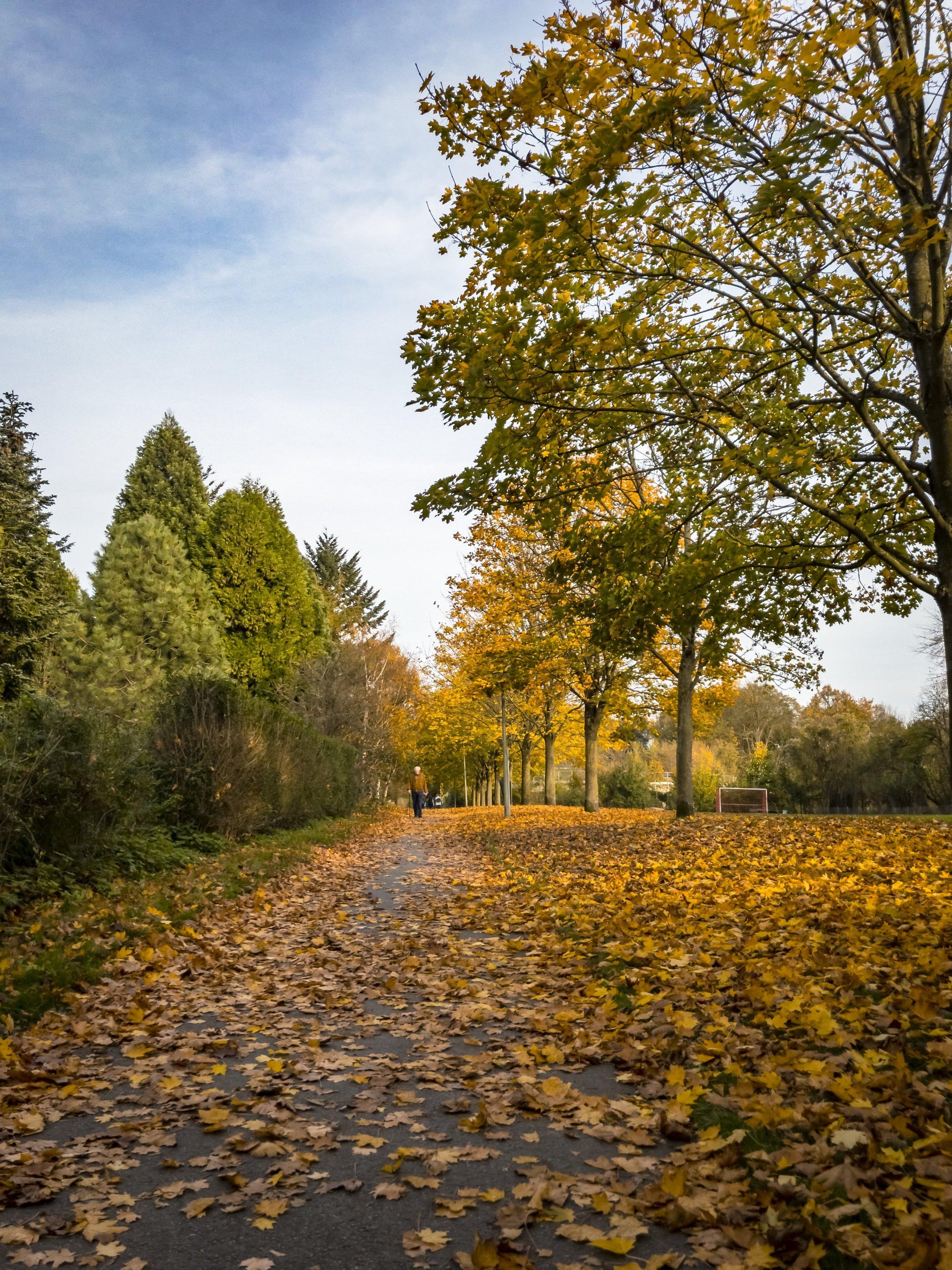 APC_0480-hdr 2 - Herbst ShotoniPhone Autumn Blätter Leaves Sun Sonne Light Threes Licht Bäume Baum Stadt Osnabrück.jpg