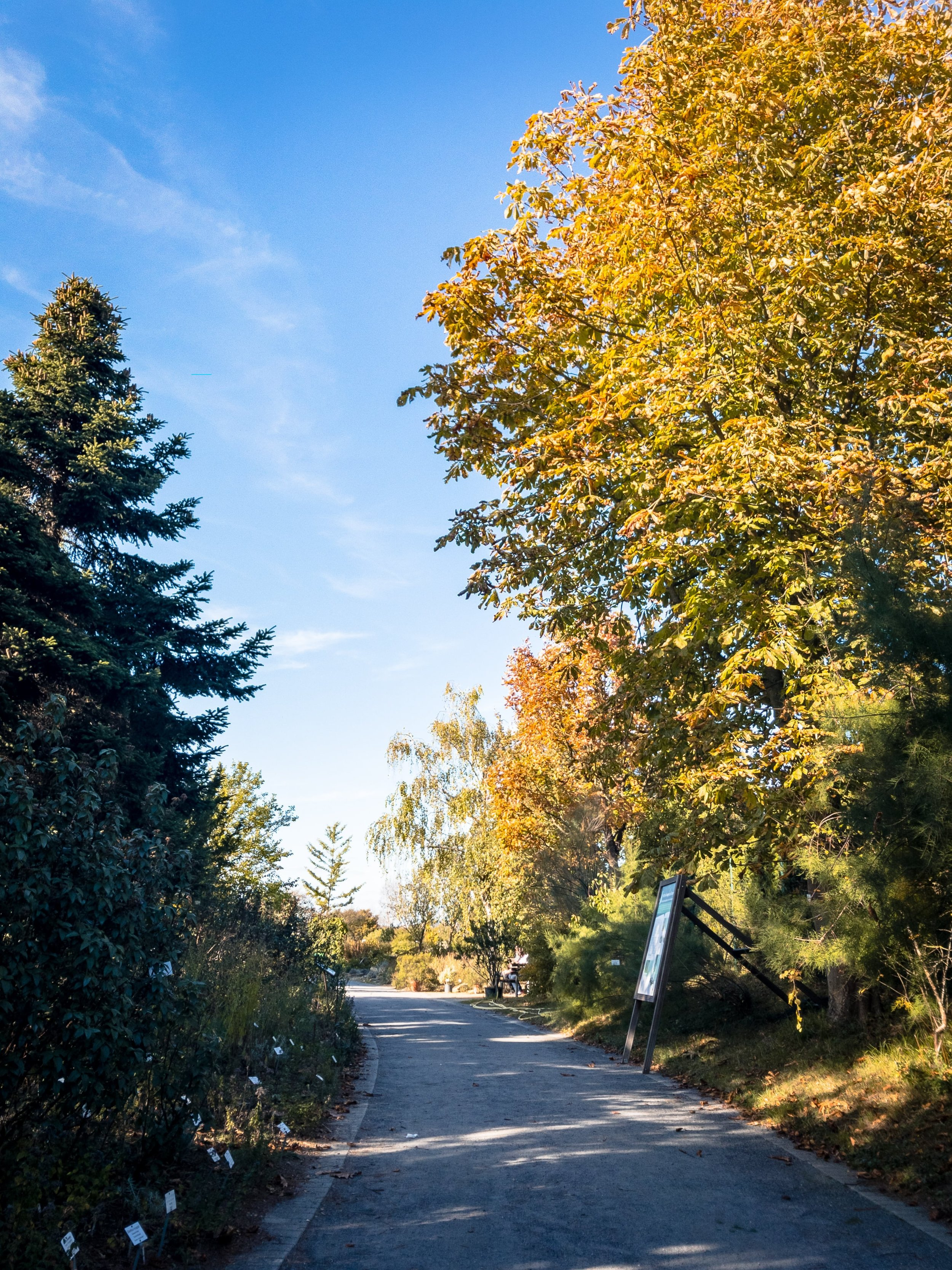 APC_0359-hdr - Herbst ShotoniPhone Autumn Blätter Leaves Sun Sonne Light Threes Licht Bäume Baum Stadt Osnabrück.jpg