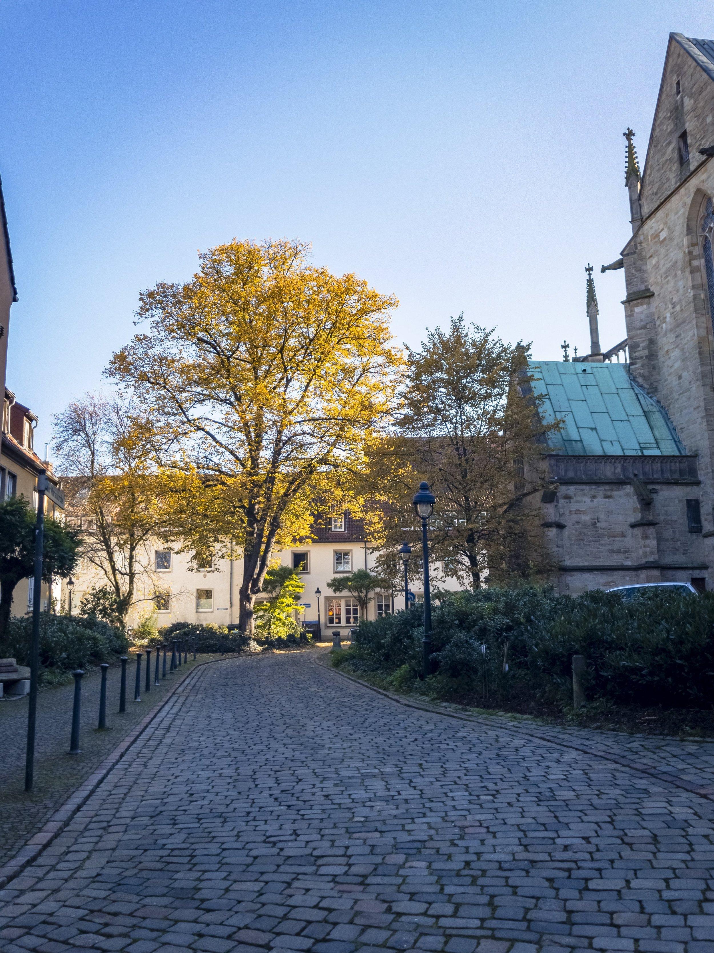 APC_0378-hdr 2 - Herbst ShotoniPhone Autumn Blätter Leaves Sun Sonne Light Threes Licht Bäume Baum Stadt Osnabrück.jpg