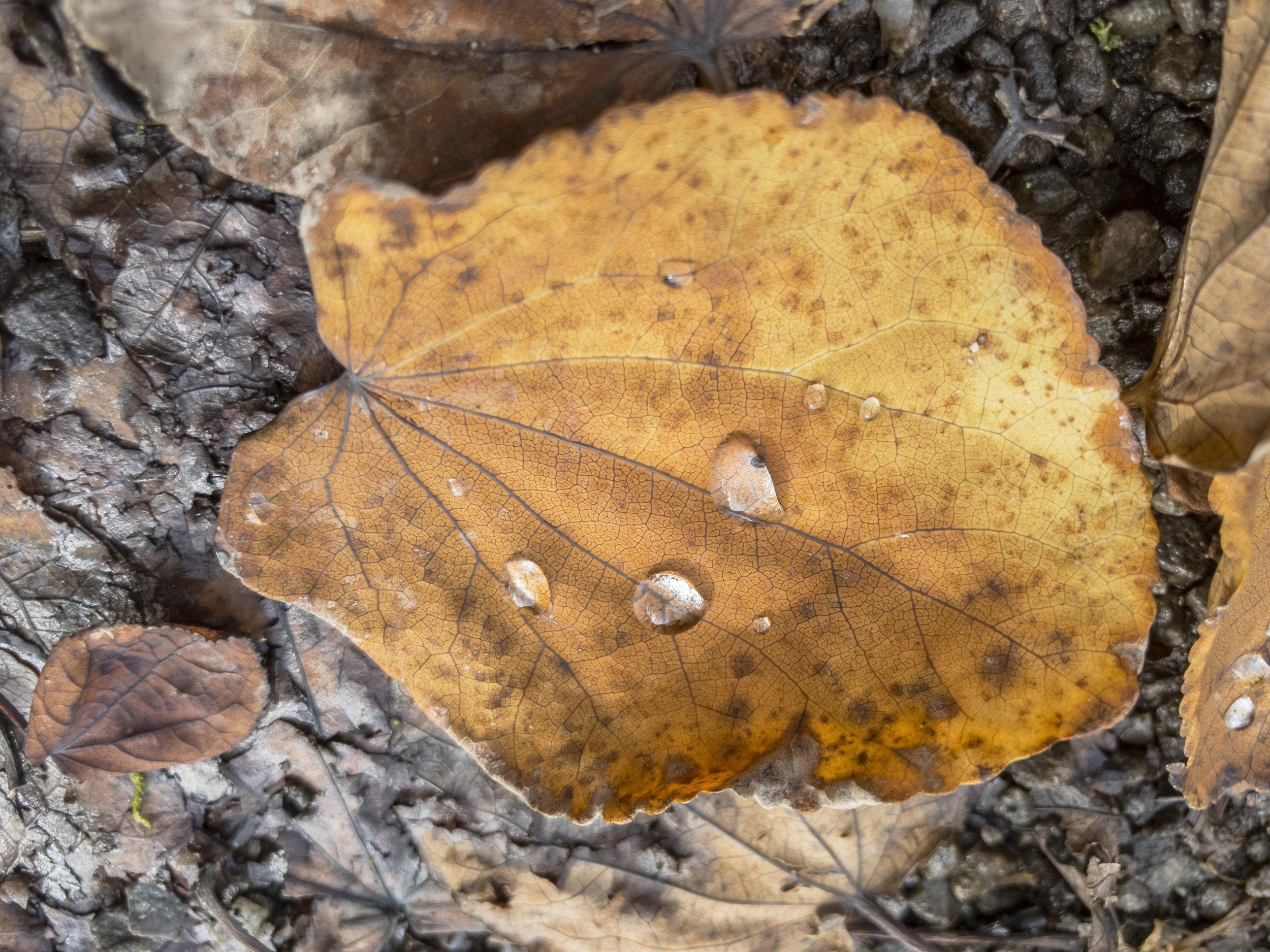 APC_0116-hdr - Herbst ShotoniPhone Autumn Blätter Leaves Sun Sonne Light Threes Licht Bäume Baum Stadt Osnabrück.jpg