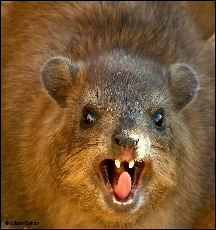 The waste product of the hyrax lends an animalic scent to a perfume, and Pluto rules over primal urges in astrology.