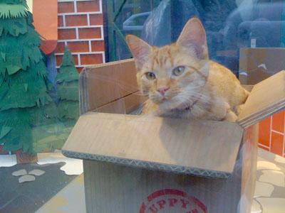 macys kitty