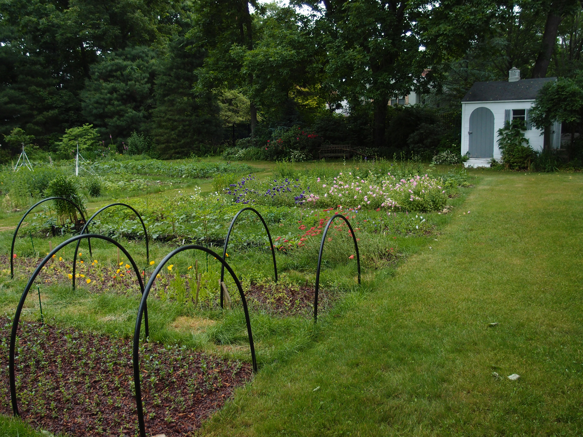 Early summer 2012 back beds 4.jpg