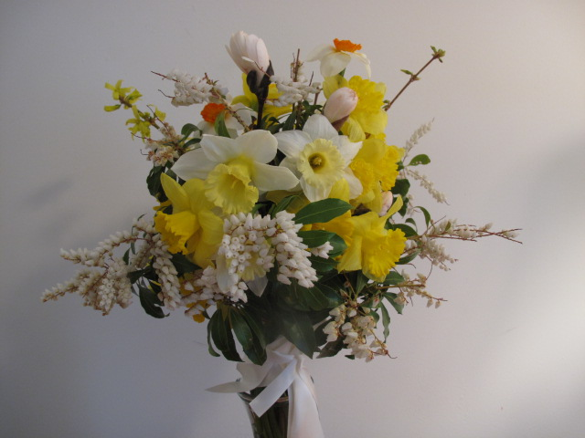 Daffs, andromeda and magnolia.JPG
