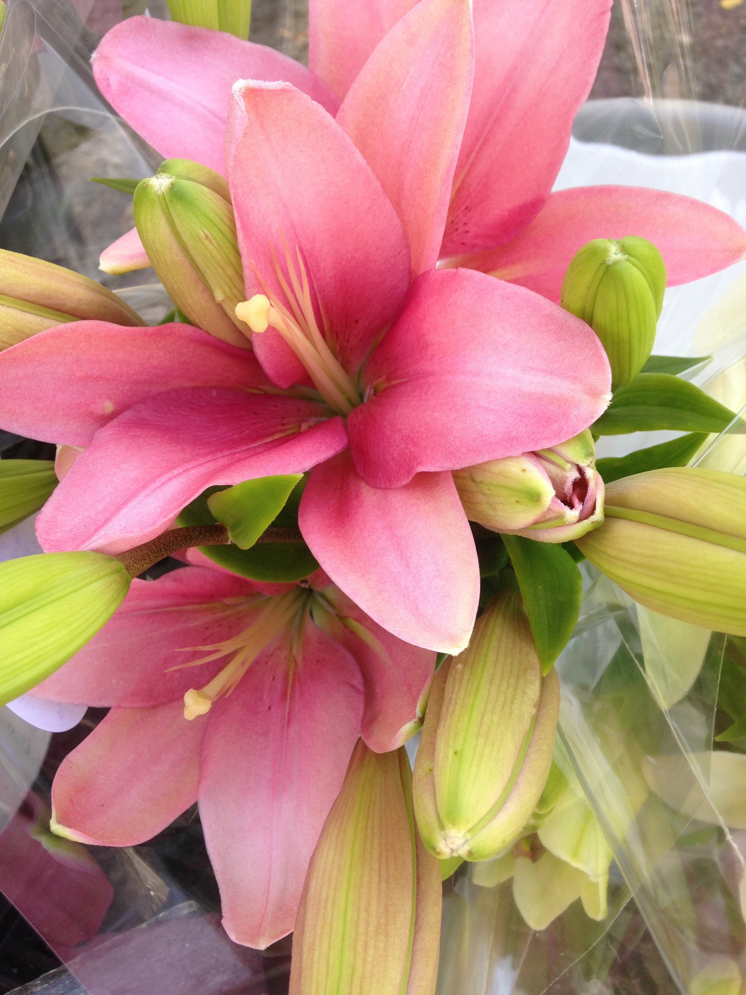 Could use a whiff of lilies right about now.