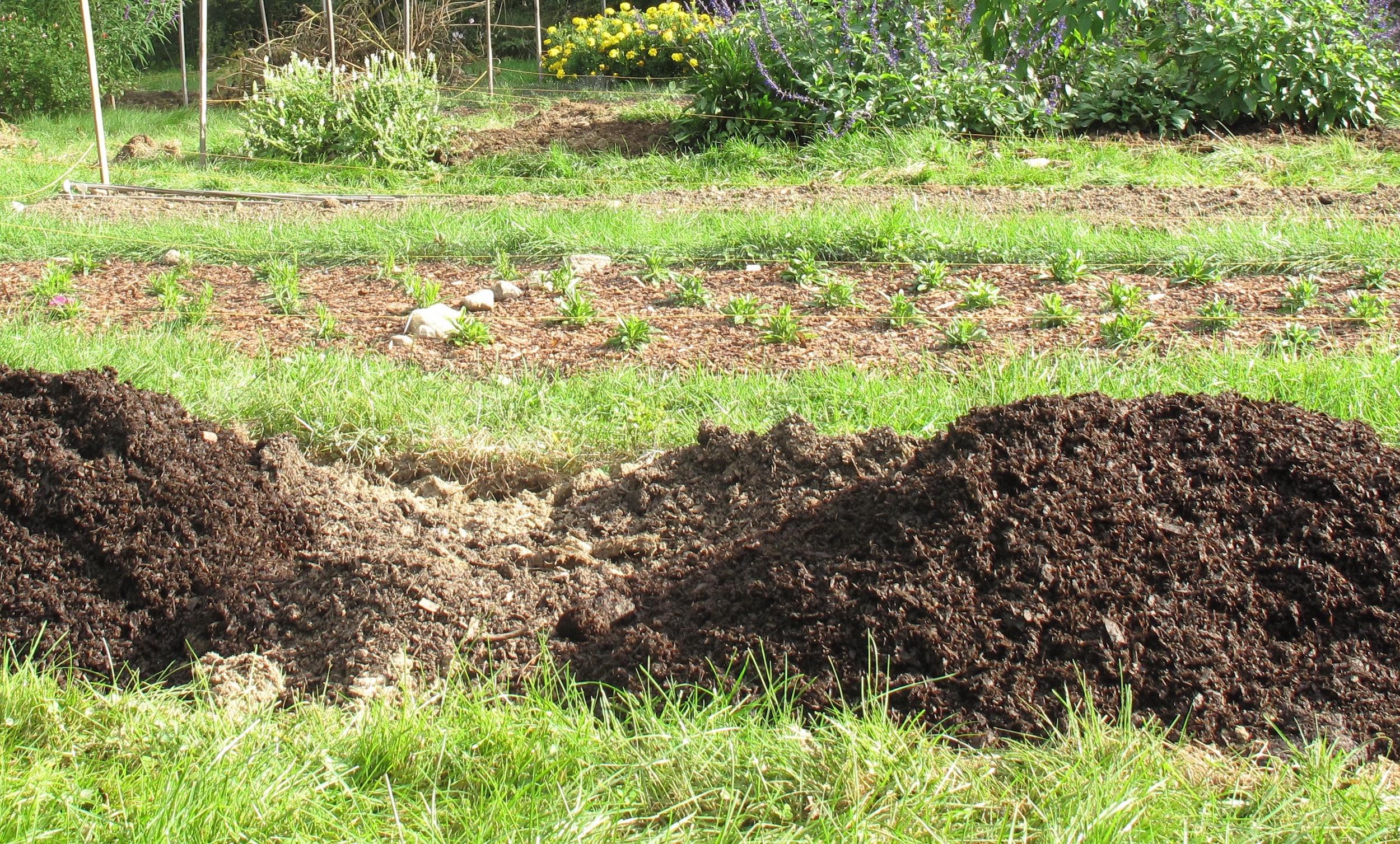 Compost Addition 3 copy.jpg