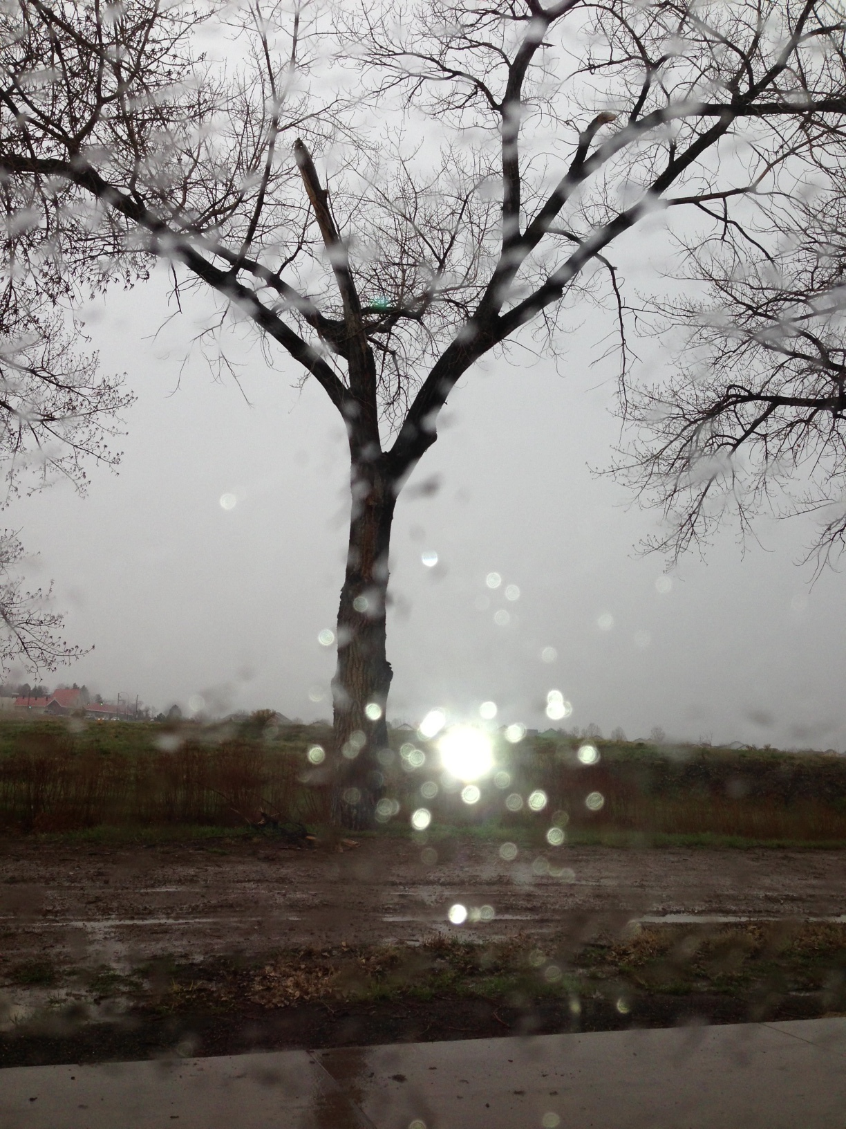 rainy window.JPG