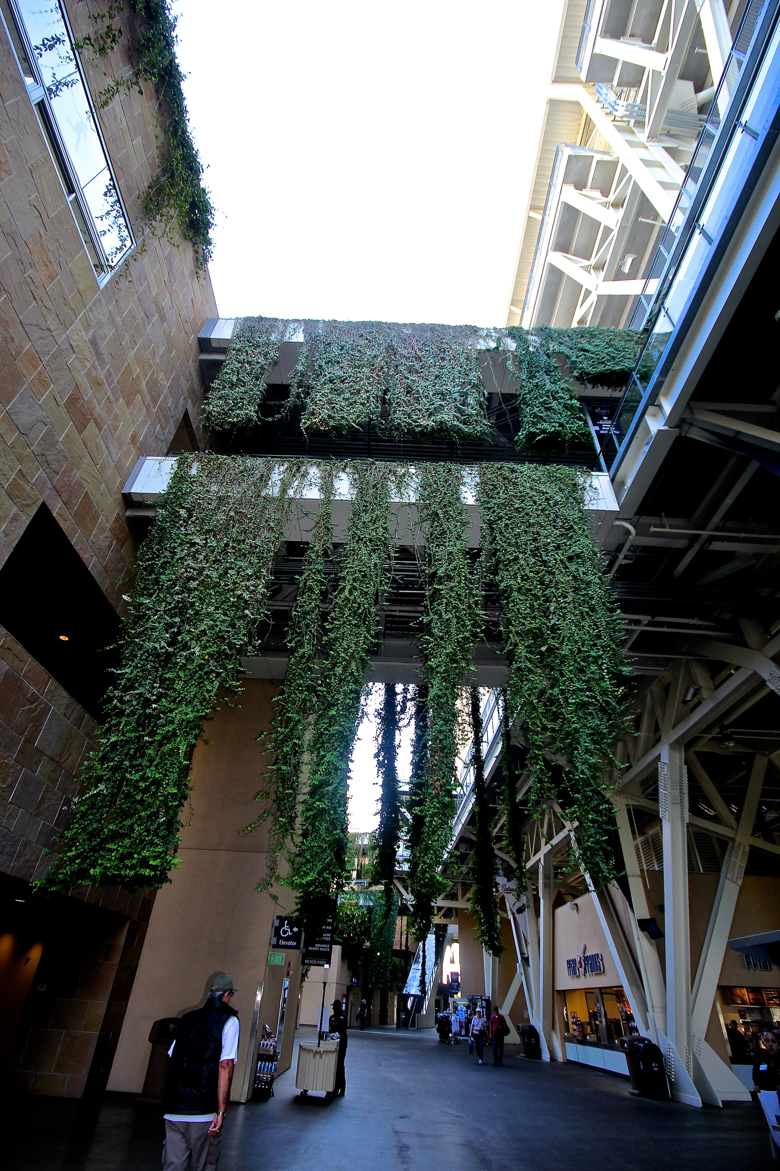 Vegetation on the concourse