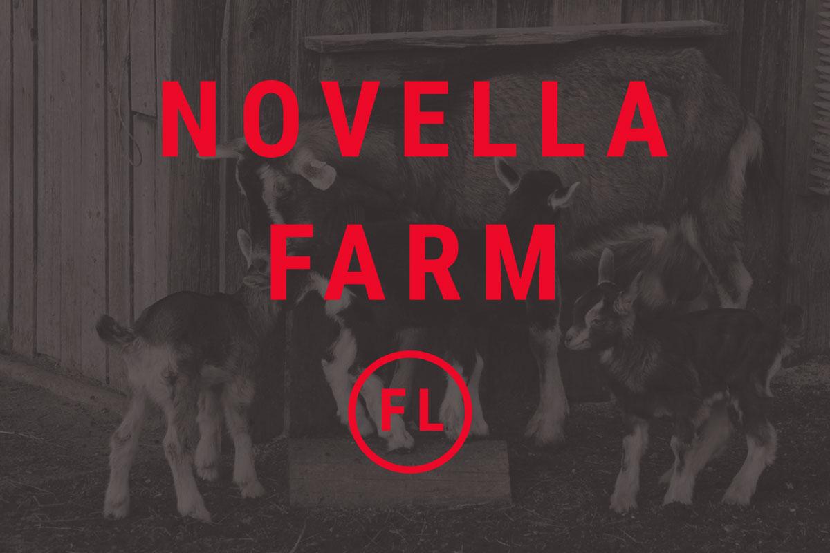 novella_goats.jpg