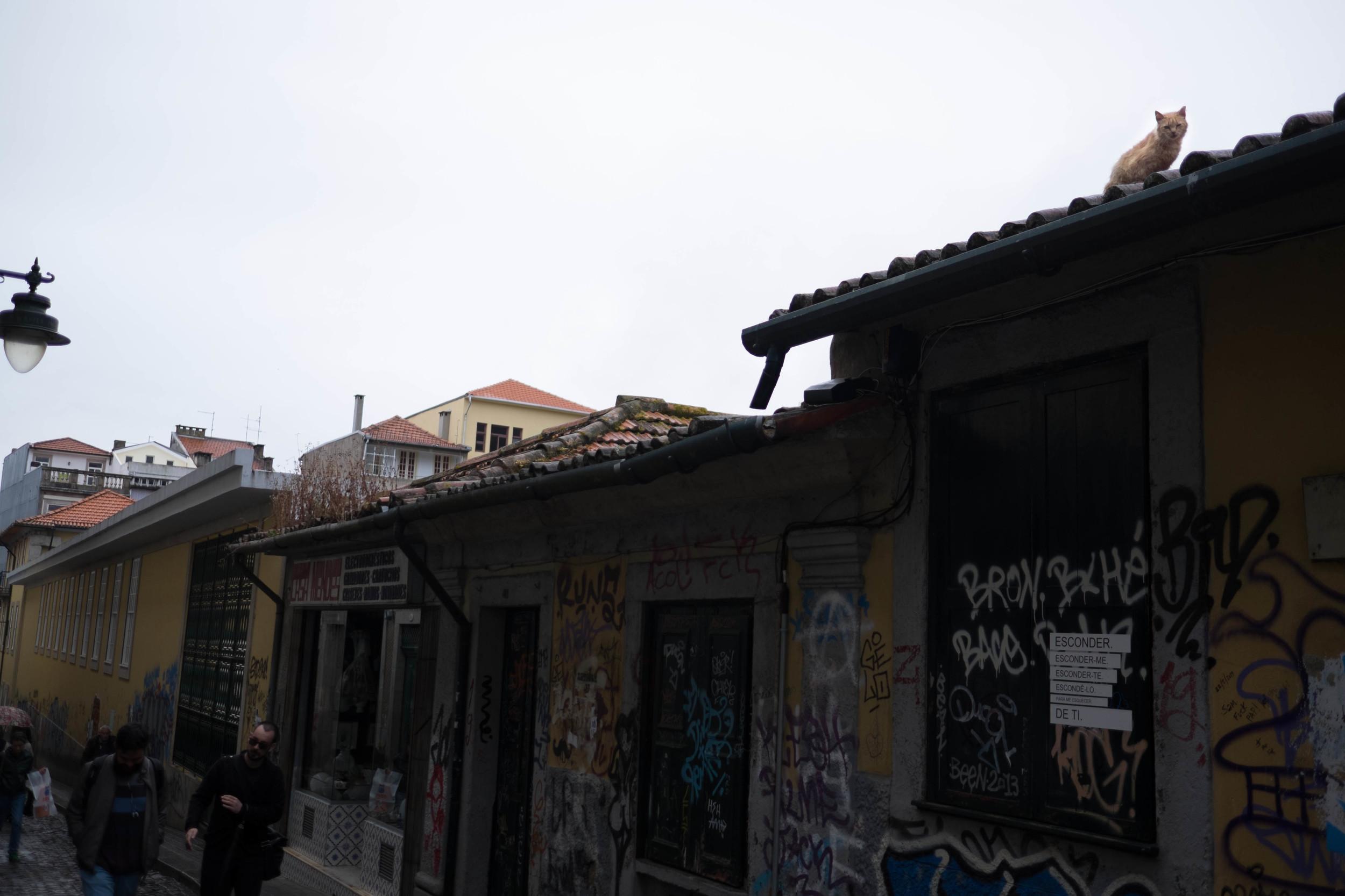 Kristen_Humbert_Philadelpia_Photographer_Travel_Editorial_Portugal-3930.jpg