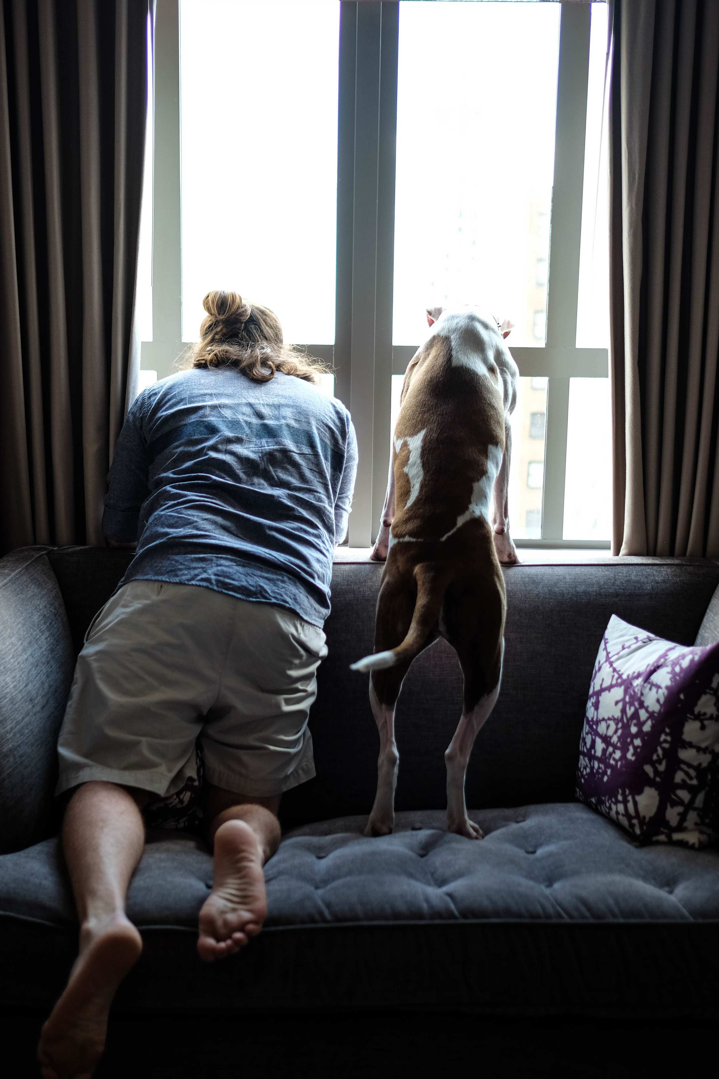 A Particularly Puppy Friendly Hotel -