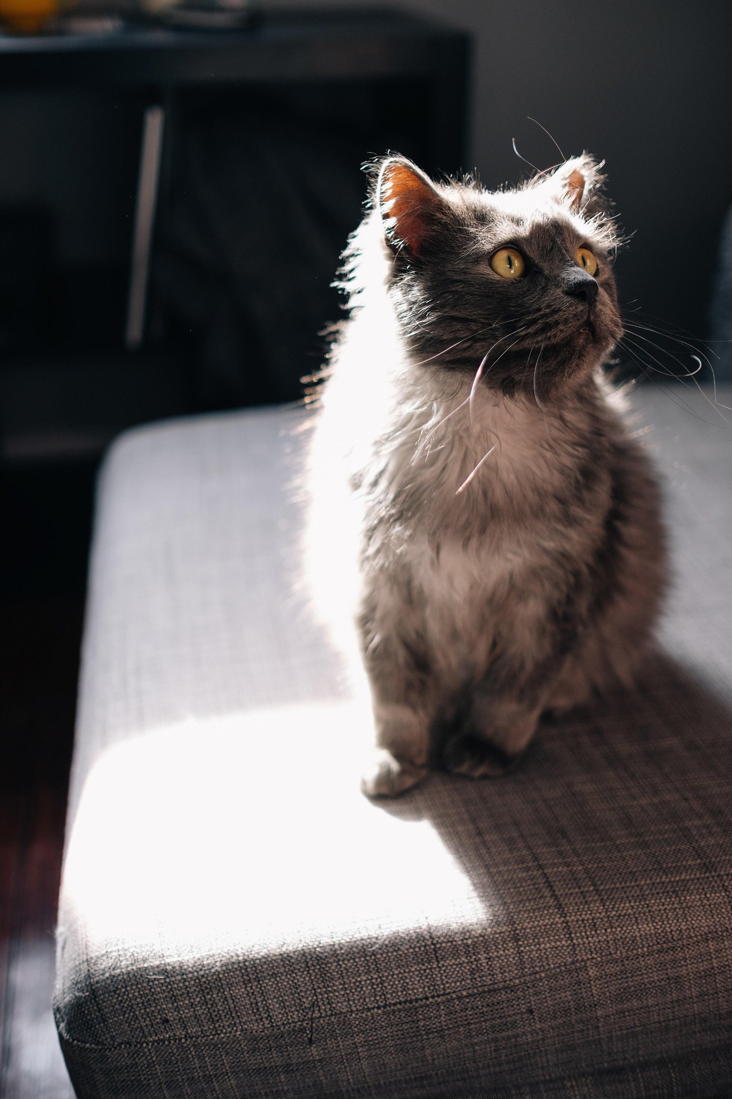 Kristen-Humbert-Philadelphia-Portrait-Photographer-Dustin-3841.jpg