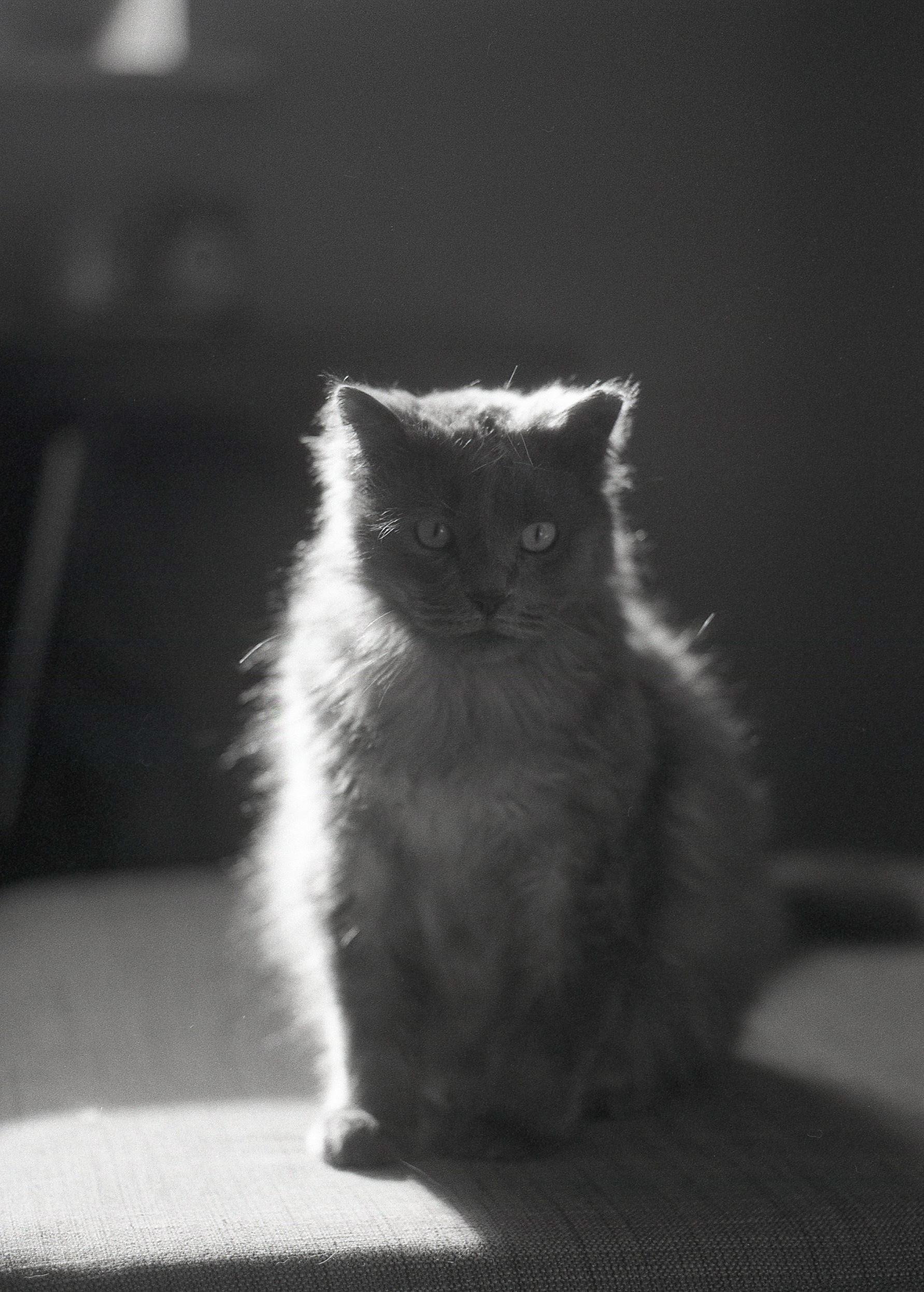 Kristen-Humbert-Philadelphia-Portrait-Photographer-Dustin-002.jpg