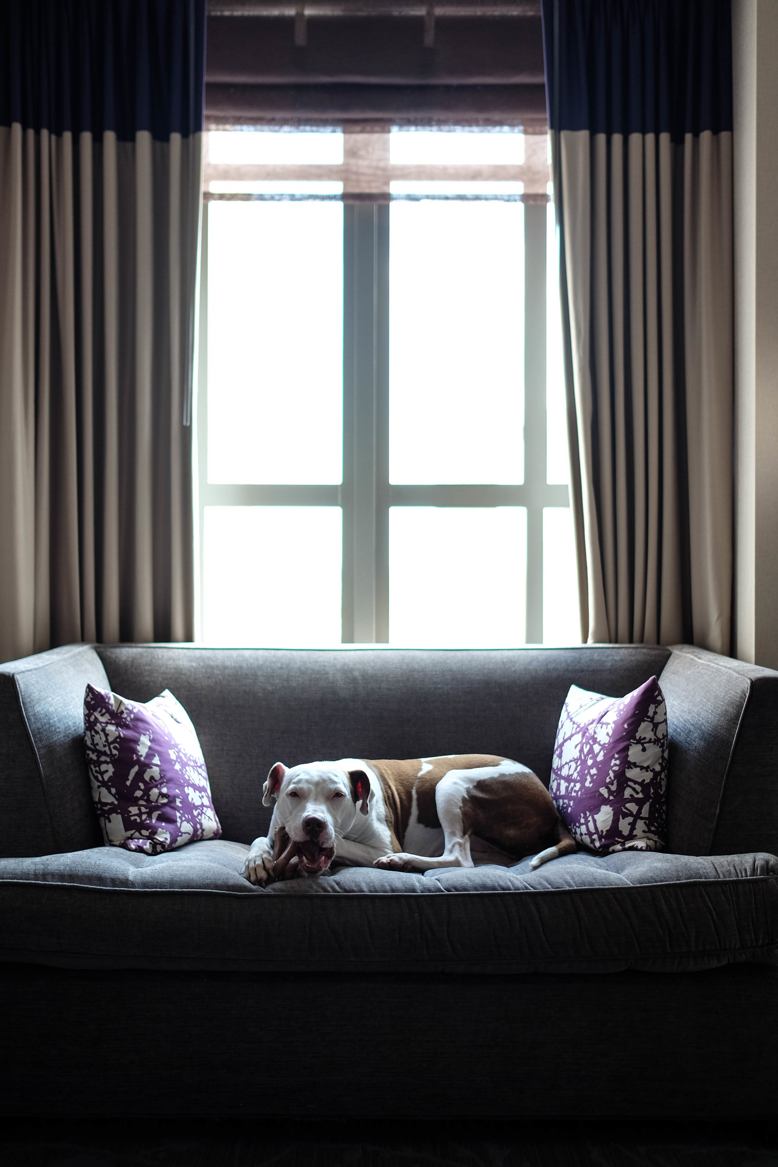 Kimpton_Hotel_Philadelphia_Dog_Friendly_Photographer_Kristen_Humbert-7694.jpg