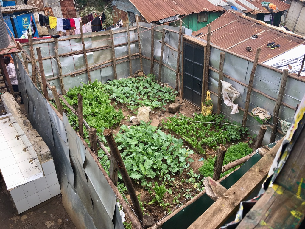 Malezi's urban farm, filled with green vegetables.