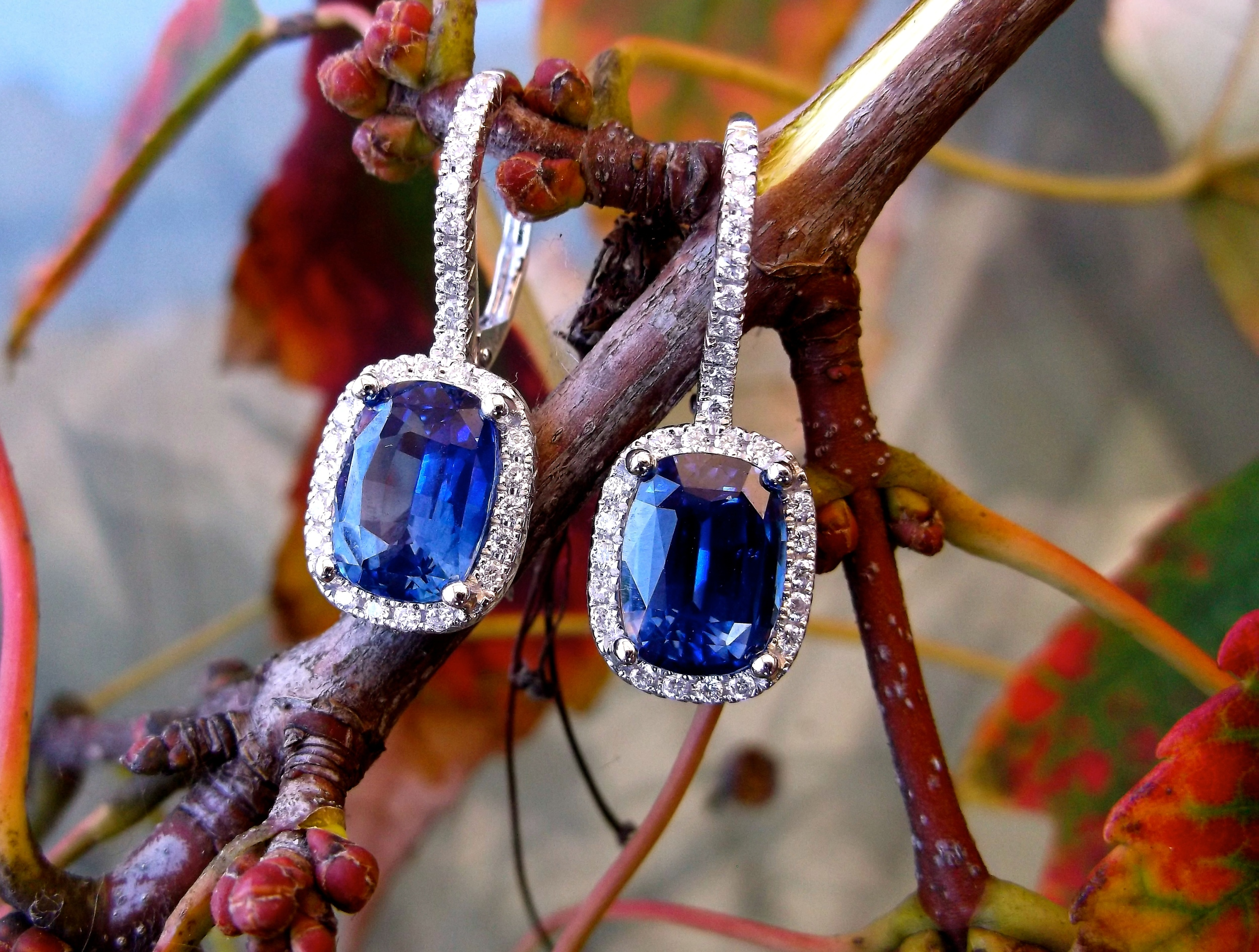 SOLD - Stunning sapphire and diamond earrings set in 18K white gold with 5.95 carats total weight in sapphires surrounded by 0.31 carats total weight in diamonds.