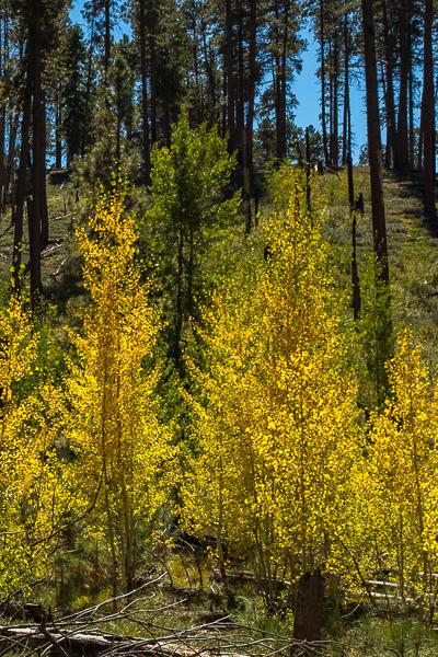 woods_north_rim_grand_canyon_national_park.jpg