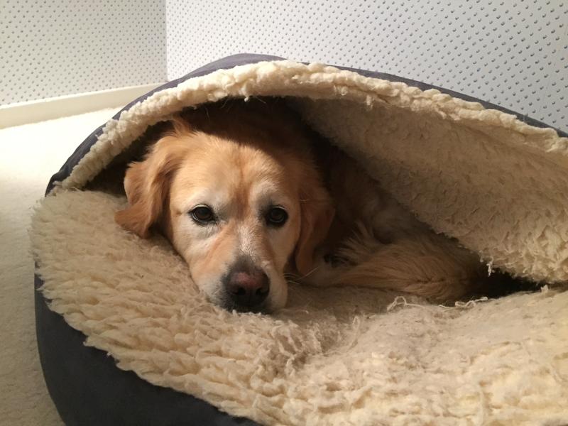 dog_snuggled_up_bedtime.jpg