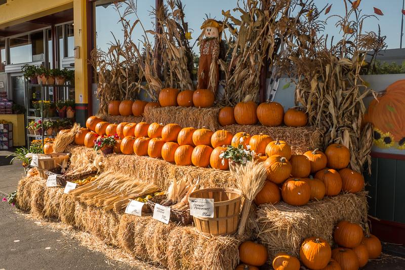 pumpkins_galore.jpg