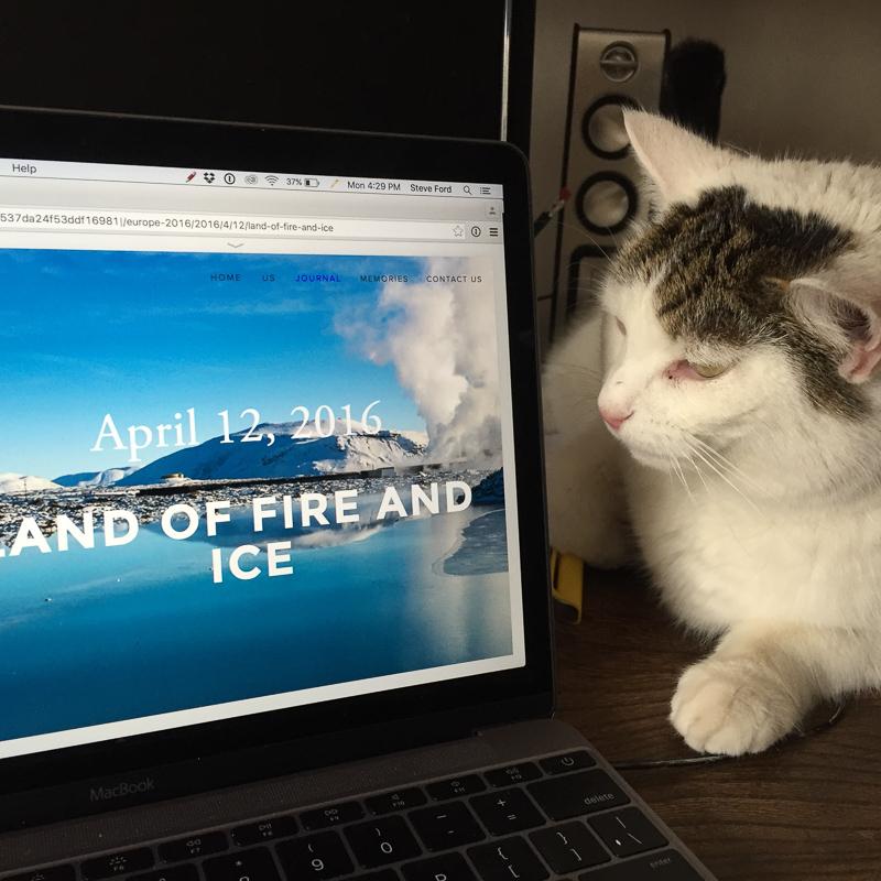 Harold_cat_blogging.jpg