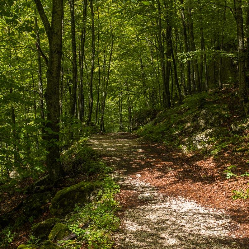 forest_path_gole_dell_infernaccio_marche_italy.jpg