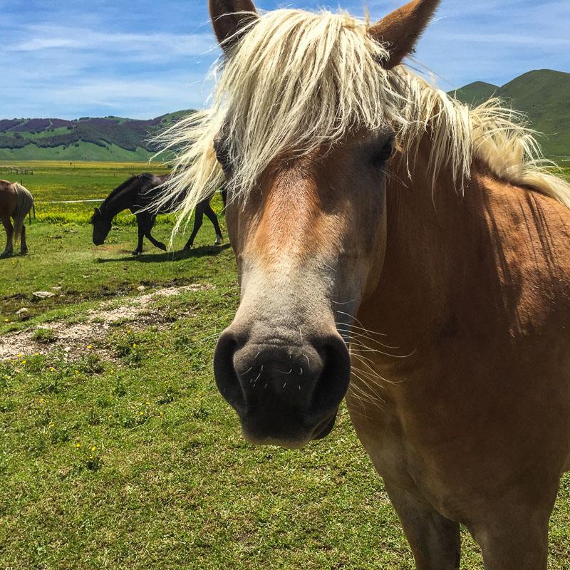 horse_piano_grande_marche_italy.jpg