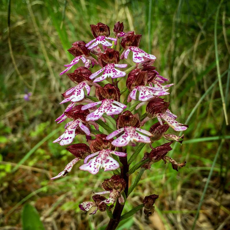 wildflower_italy.jpg