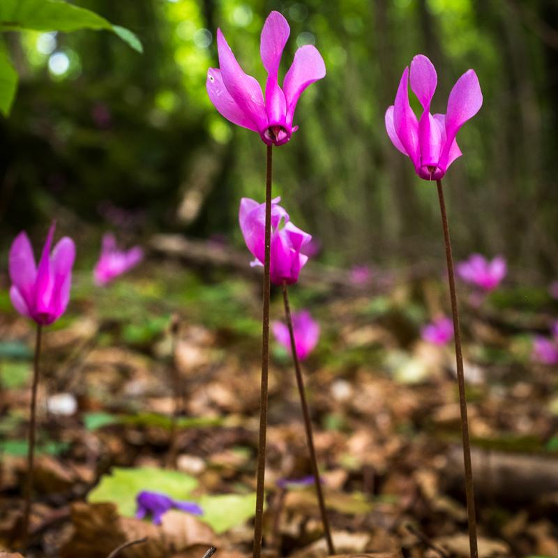 wildflower_italy_2.jpg